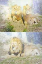 Deko-Bilder & -Drucke mit Tier-Thema