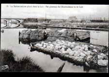 (BELGIQUE) RECOLTE du LIN dans LA LYS vers 1930