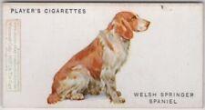 Welsh Springer Spaniel Dog Canine Pet 1920s Ad Trade Card