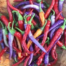 Buena Mulata Chili - 10+ seeds - Heirloom - COLOURFUL and DELICIOUS!