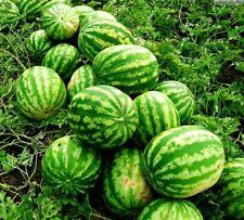 Watermelon Au Producer Seeds organic non-GMO seeds Ukraine 3 g Farmer's dream