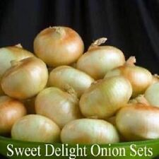 Onion Sets, Sweet Delight,(30 Bulbs) Onion Sets -  Organic ,Heirloom - Non-GMO