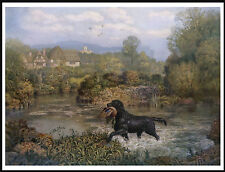 Flat Coated Retriever Dog Retrieving Bird From Water Lovely Dog Print Poster