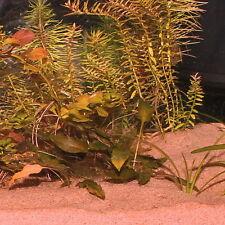 JBL Sansibar 10 Kg (eur 1 99/kg) orange oder Red rot Bodengrund Aquarium Kies