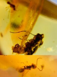 unknown bug&fly&wasp Burmite Myanmar Burmese Amber insect fossil dinosaur age