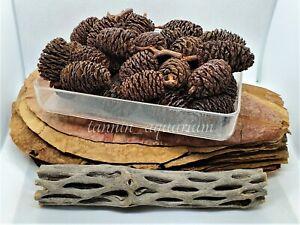 30pcs Grade A Large Catappa Leaves 90g Jumbo Alder Cones 6' Cholla Cactus Wood