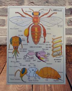 Set de Table 42 x 30 cm Apiculture l'Abeille Métamorphoses Anatomie Oeuf