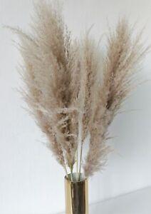 5 Stk. Getrocknetes Pampasgras fluffig puffy ca.100cm natur Wedel Trockenblumen