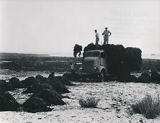 FINISTÈRE c. 1950 - 5 Photos Loctudy - Plobanalec - Île Tudy  Bretagne - L 60