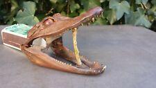 Tête crocodile alligator naturalisée gueule mobile Étrange, curiosité Long 14