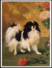 Japanese Chin And Chrysanthemums Lovely Dog Print Poster