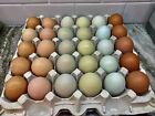 12+ Chicken Hatching Eggs Rare! Araucana Ameraucans Orpington Sussex Maran