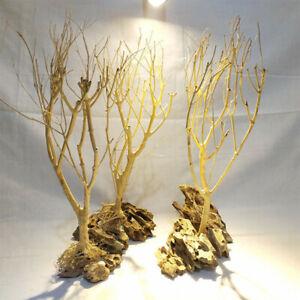 Natural Driftwood Bonsai Moss Tree For Aquarium Freshwater Tank Landscape Decor