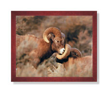 Bighorn Sheep On Mountain Outdoor Wildlife Wall Picture Cherry Framed Art Print