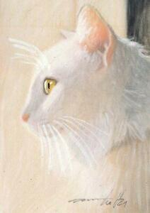 ACEO original pastel drawing  white maine coon cat by Anna Hoff