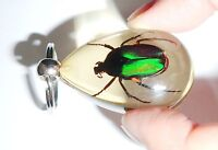 Insect Key Ring Black Rose Chafer Beetle SK09 Amber Clear 2 Pieces Lot