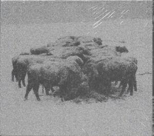 BVDUB Ten Times The World Lied CD *SEALED* brock van wey echospace cv313
