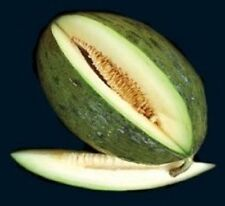 Melon Heirloom PIEL DE SAPO Spanish 65 SEEDS Rare Large Sweet**COMBINE SHIPPING*