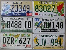 BIRD THEMED SMALL COLLECTION OR DECOR GROUP of 6 License Plates