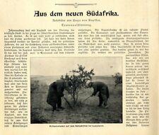 Bilder der Zerstörung Burenfarmen u.Gräber Transvaal Südafrika Report von 1901