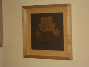 Framed Autumnal Botancial - Tulip Tree Leaves with Sugar Maple Frame