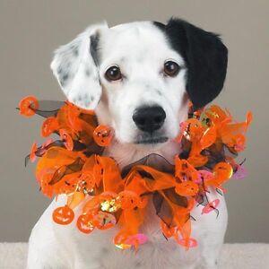 Dog Scrunchy Neckwear Halloween Orange/Blk Pumpkins SM