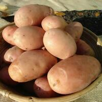 Seed Potatoes Stemster 2nd early 1kg