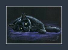Black Cat On Purple A Print by I Garmashova
