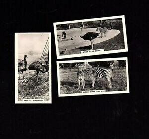 3-1934 Nicolas Sarony Tobacco Cards Life At Whipsnade Zoo #'s 28,29 & 30