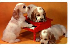 Puppies w/ Red Toy Piano Instrument-Vintage Pet Dog Animal Postcard