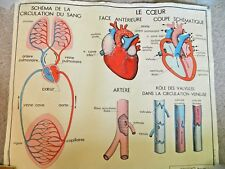 Vintage French Anatomical Medical Chart Le Coeur/La Circulation Ed. Rossignol
