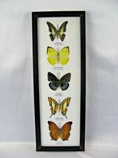 5 echte exotische Schmetterlinge im Schaukasten aus Holz Glas - Einzelstück h_01