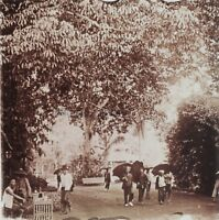 IndoChine Saigon Jardin Vietnam Photo Stereo Vintage Plaque de verre 45x107mm