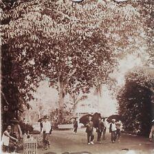 Indochina Saigon Garten Vietnam Foto Stereo Vintage Platte Gläser 45x107mm