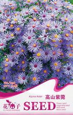 1 Pack 50 Alpine Aster Seeds Aster Alpinus Asteraceae Garden Flowers A236