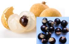 10 fresh tropical exotic purple Longan langsat tree/plant/fruit seeds from Asia