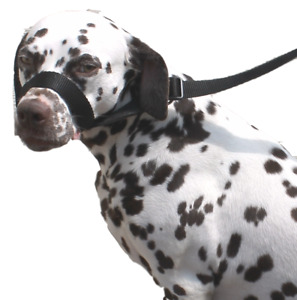 Black Dog Lead Stop dogs pulling slip lead collar halter training figure of 8.