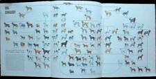 1949 Pin Up Dog Genealogy Poster PRINT ARTICLE 114 Breeds Rep Shepherds Lap +