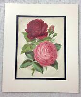 1877 Antico Botanico Stampa Rose Reynolds Rosa Profondo Rosso Cromolitografia