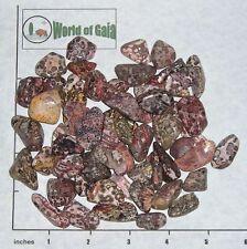 """LEOPARD SKIN Jasper, sm-med tumbled, 1/2 lb bulk stones snake skin 5/8-1"""""""