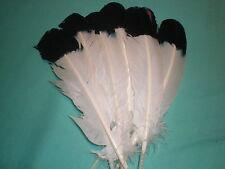lot 10 plumes blanche a pointe noir 30 cm
