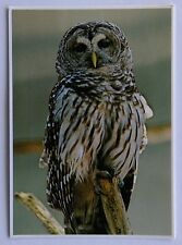 Javan Brown Wood Owl Postcard (P282)