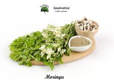 Moringa Oleifera - 15 semillas - Moringa - seeds