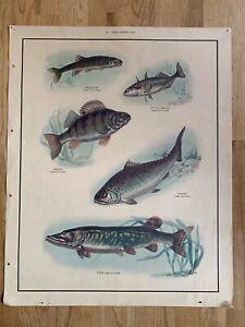 Vintage Original MacMillan School Nature Poster Freshwater Fish Trout Pike Perch