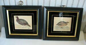 Pair Vintage Bird prints Red Grouse & Quail Reverse painted glass mat Black fram