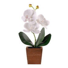 LIVINGbasics® Decorative Artificial Flower Butterfly Orchid in Wood Pot, White