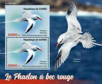Guinea Birds on Stamps 2020 MNH Tropicbird Red-Billed Tropicbird 2v S/S + IMPF