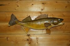 Real Skin Mount Walleye Pike Northern Musky Sauger Fish Taxidermy FW35