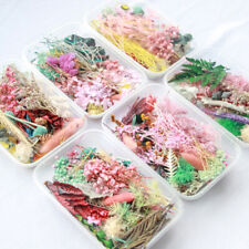1Box Real Pressed Dried Flowers For Art Craft Resin Pendant Jewellery Making DIY