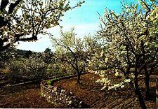Mallorca, almendros en flor, postal